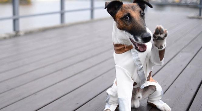 Пес Фокстер протягивает «Лапу Допомоги» бездомным животным Киева