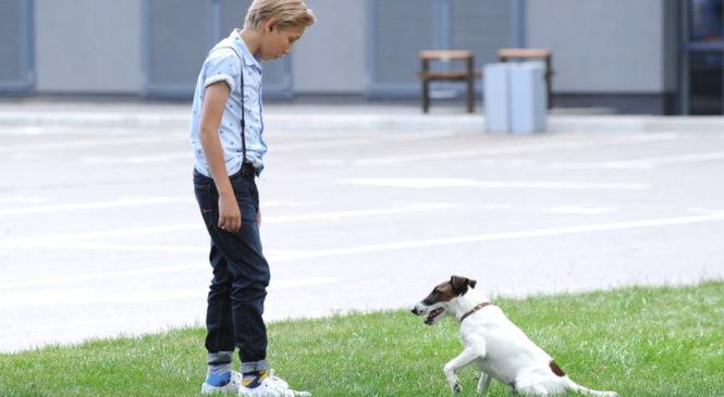 В Сети появилось первое 3D-изображение собаки-супергероя Фокстера